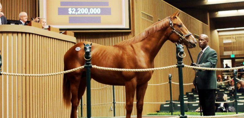 Godolphin AMERICAN PHAROAH tayına 2.2 Milyon Dolar verdi!