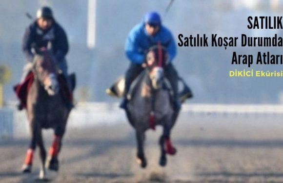30.000 TL'ye Koşar Durumda Yarış Atları…