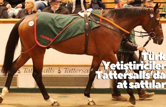 Türk Yetiştiriciler Tattersalls'da at sattılar