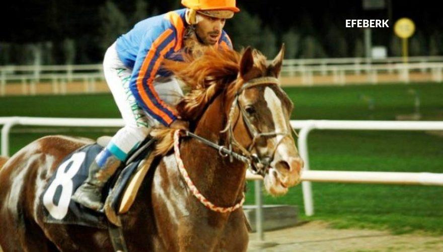 Satılık Koşar Durumda Arap Atları