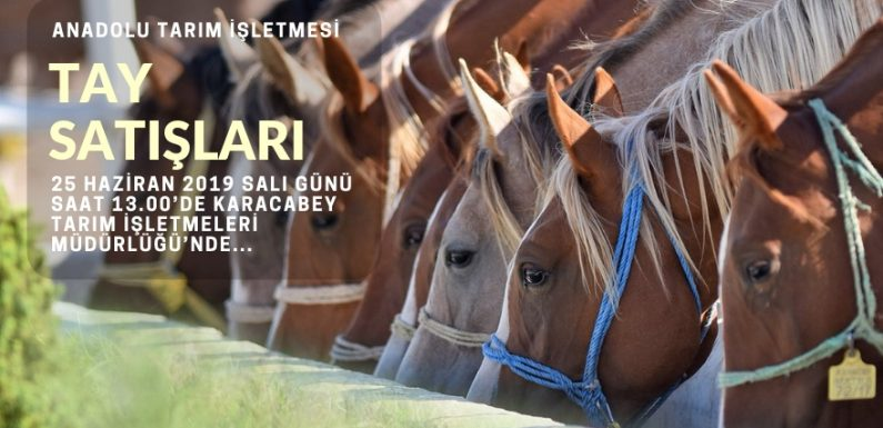 Anadolu Tarım İşletmesi tayları satışa sunuluyor!