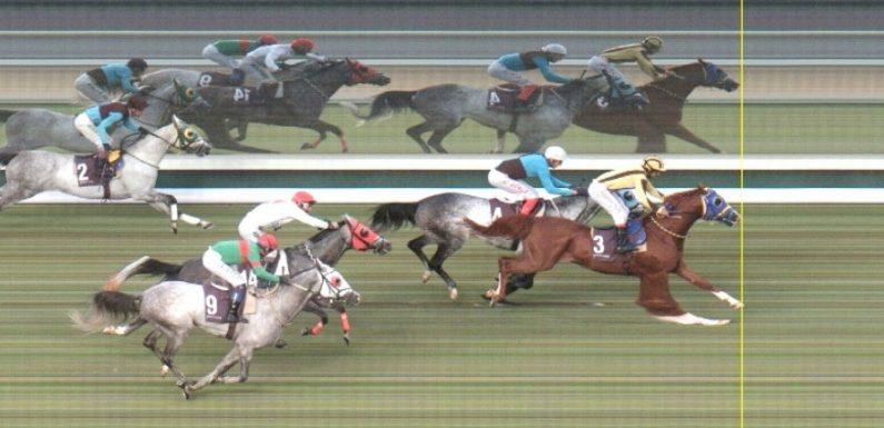 Satılık Arap Atı