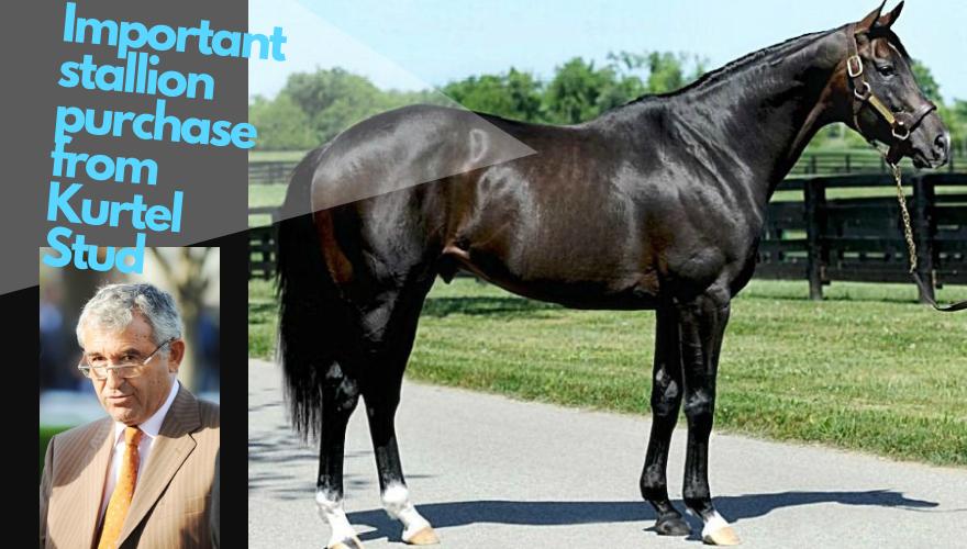Important stallion purchase from Kurtel Stud