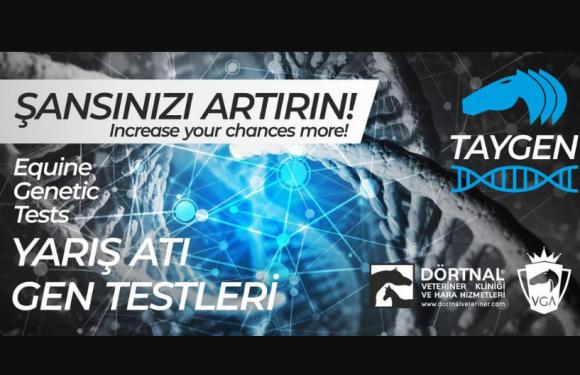 Atlarda Gen Analizi Türkiye'de de başlıyor!