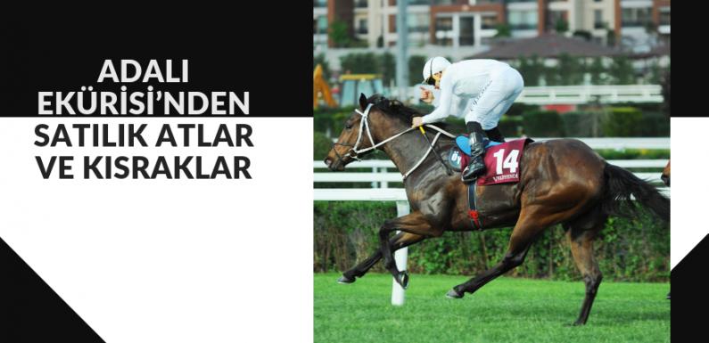 ADALI EKÜRİSİ'nden Satılık Atlar ve Kısraklar