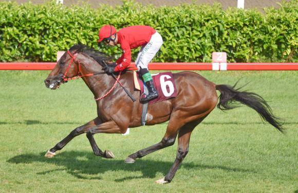 Satılık Grup Atı…