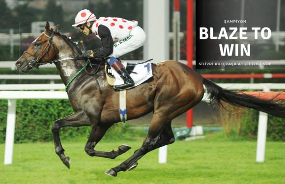 Şampiyon BLAZE TO WIN Silivri'de yetiştiricilerin hizmetinde!