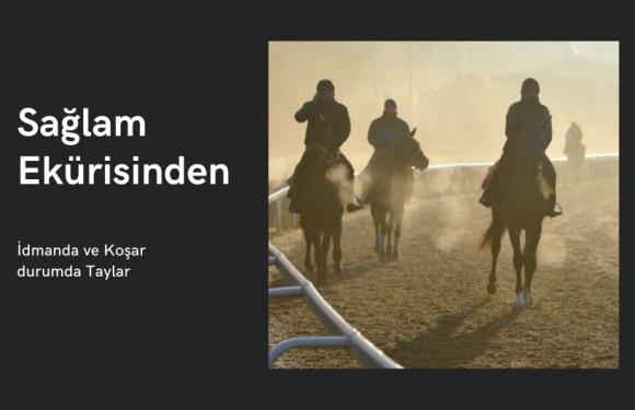 SAĞLAM Ekürisi'nden İdmanda/Koşar durumda Taylar