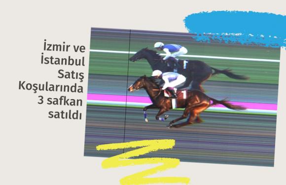 İzmir ve İstanbul Satış Koşularında 3 safkan satıldı