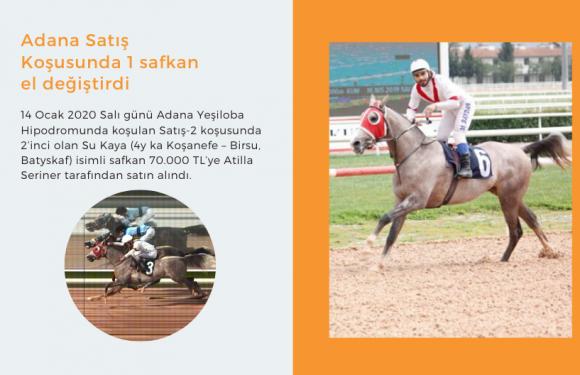 Adana Satış Koşusunda 1 safkan el değiştirdi