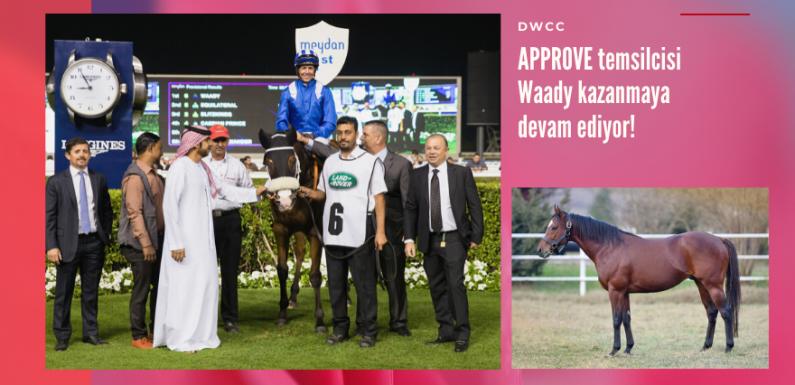 Approve temsilcisi Waady kazanmaya devam ediyor!