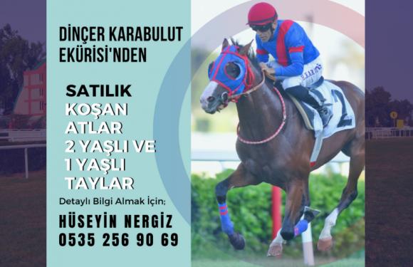 KARABULUT EKÜRİSİ'nden Satılık Atlar