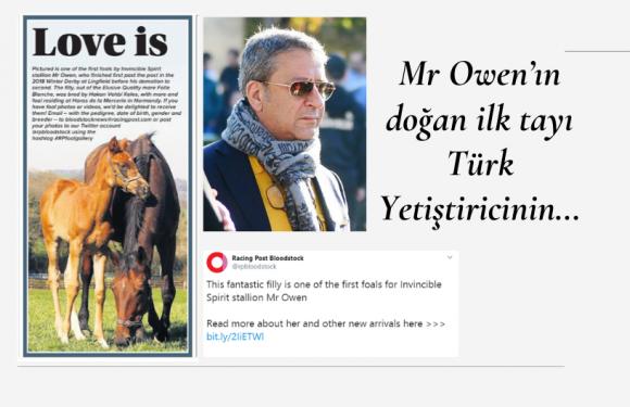 Mr Owen'ın doğan ilk tayı Türk Yetiştiricinin…