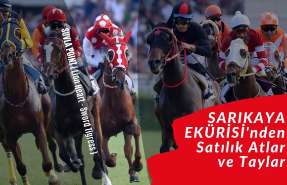 SARIKAYA EKÜRİSİ'nden Satılık Atlar ve Taylar