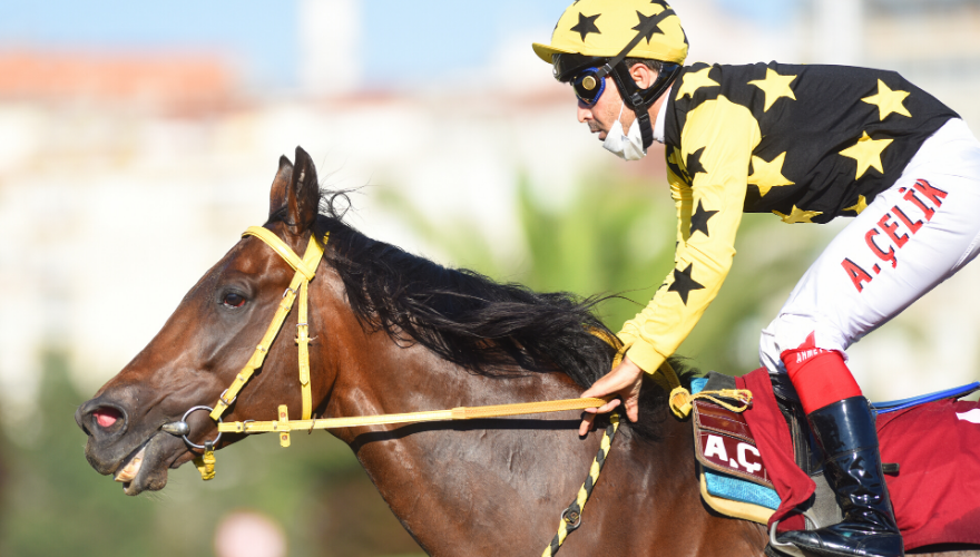 Sedat Özcan Koşusu'nu CURTARALO kazandı