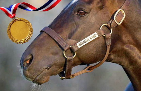 Altın Madalya MEDAGLIO D'ORO'nun…