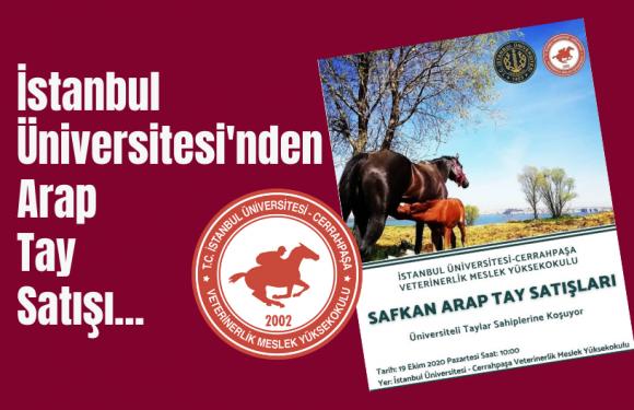 İstanbul Üniversitesi'nden Arap Tay Satışı…