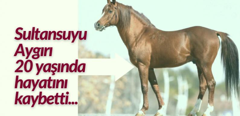 Sultansuyu Aygırı 20 yaşında hayatını kaybetti…