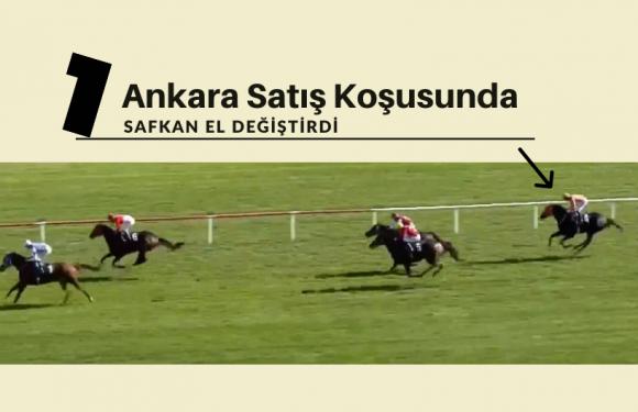 Ankara Satış Koşusunda 1 safkan el değiştirdi