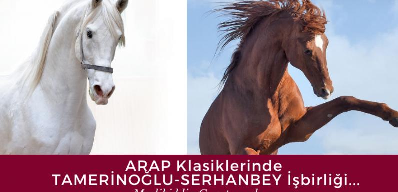 Arap Klasiklerinde Tamerinoğlu-Serhanbey İşbirliği