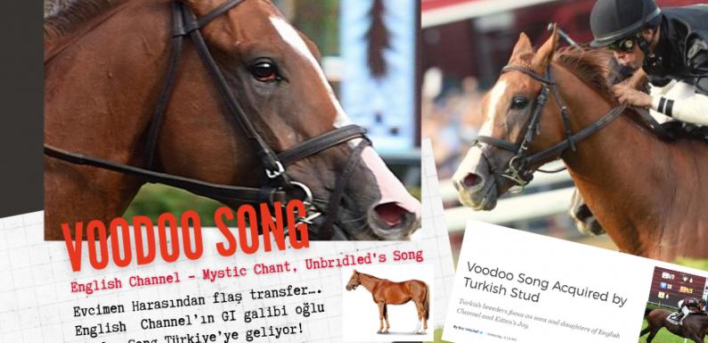 English Channel'ın G1 galibi oğlu Woodoo Song Türkiye'ye geliyor!