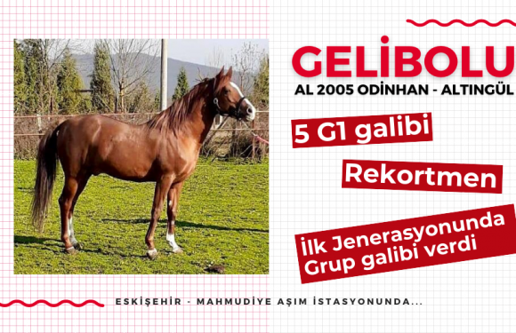 İlk Jenerasyonunda Grup galibi veren GELİBOLU Eskişehir'de…