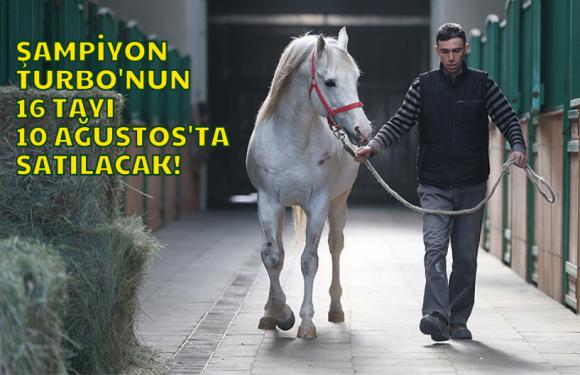 Eskişehir Anadolu TİM Tayları 10 Ağustos'ta satılacak…
