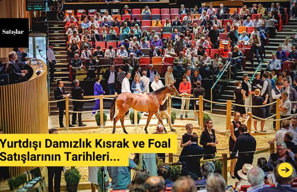 Yurtdışı Damızlık Kısrak ve Foal Satışlarının Tarihleri…