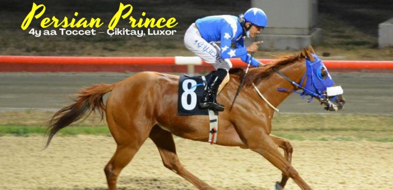 Satılık Koşar Durumda İngiliz Atı…