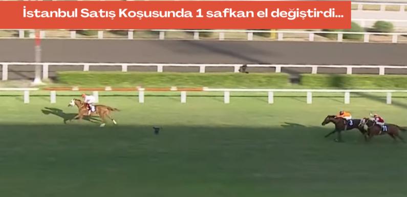 İstanbul Satış Koşusunda 1 safkan el değiştirdi…