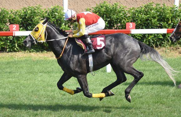 Horse Racing Ireland Koşusu'nu'Demir At' SHARPAkazandı