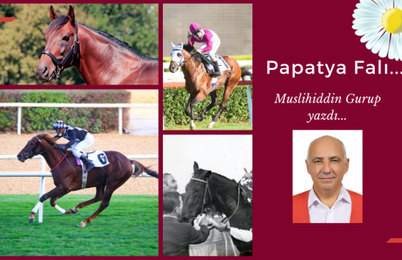Papatya Falı…