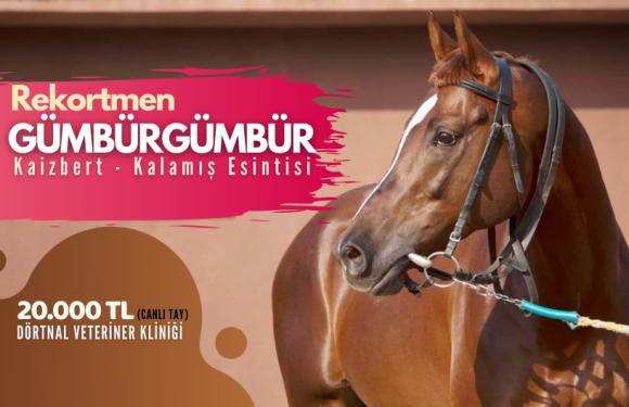Rekortmen GÜMBÜRGÜMBÜR Eskişehir'de…