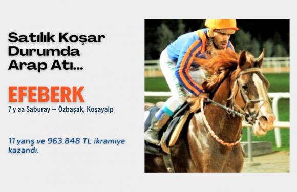 Satılık Koşar Durumda Arap Atı…