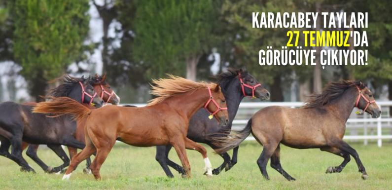 Karacabey Tayları 27 Temmuz'da görücüye çıkıyor!