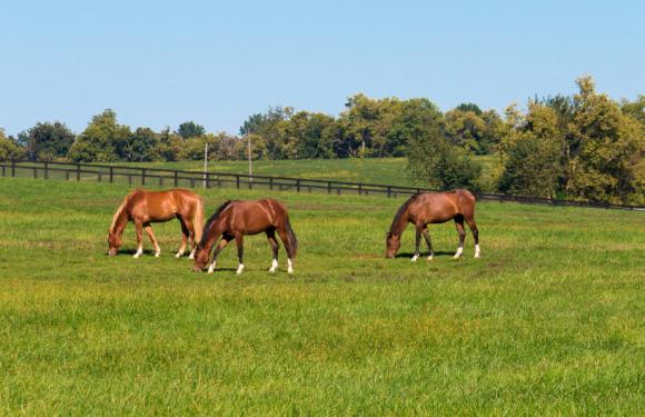 Satılık Atlar…