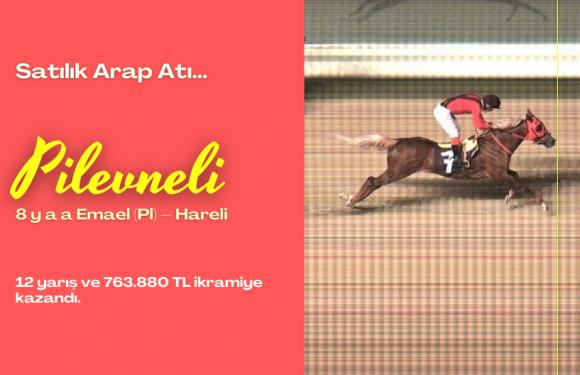 Satılık Arap Atı…