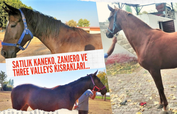 Satılık Kaneko, Zanjero ve Three Valleys Kısrakları…